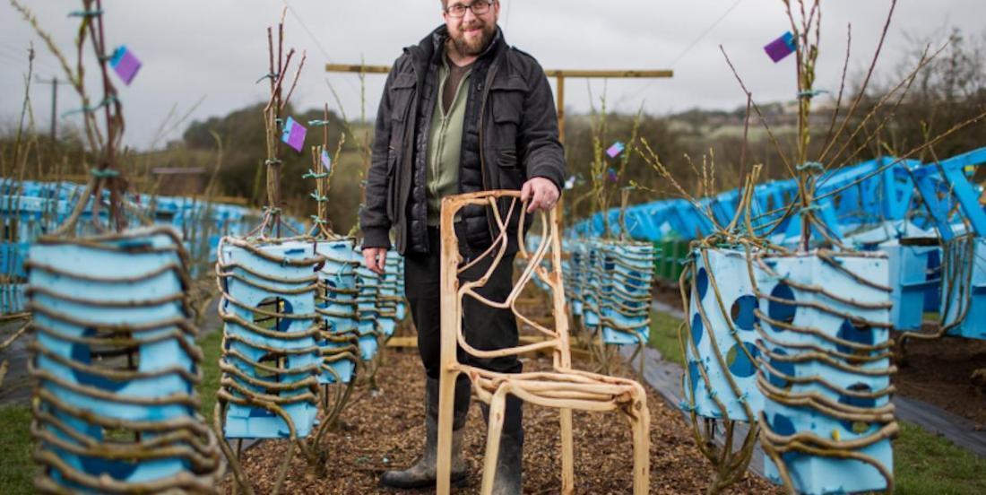 Un designer fait littéralement pousser les chaises en guidant la croissance des arbres!