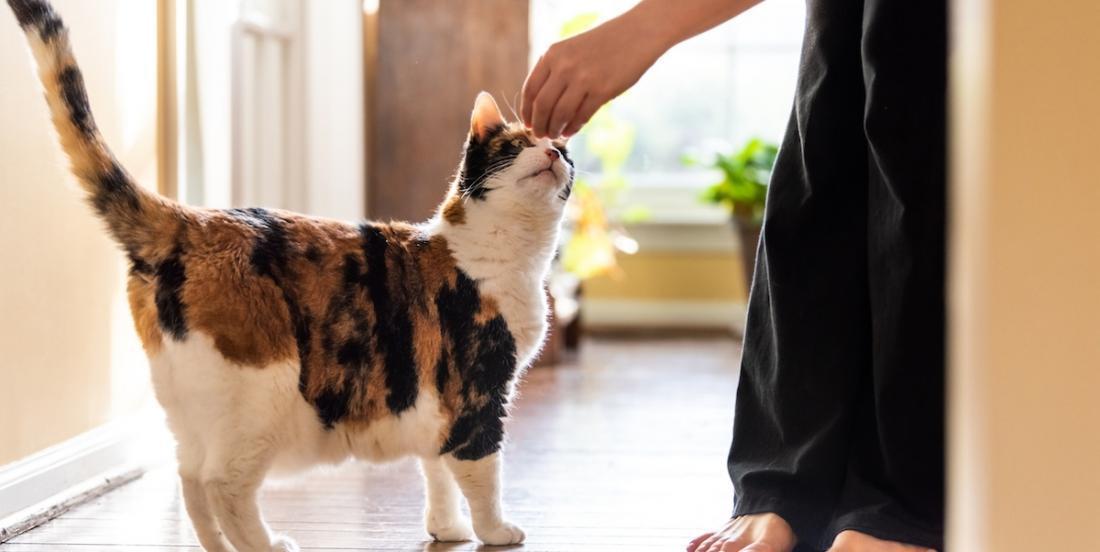 Voici comment préparer de délicieuses friandises pour chats