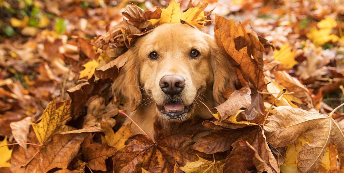 Si votre chien fait ces 9 choses, c'est qu'il vous sera fidèle pour toute sa vie!