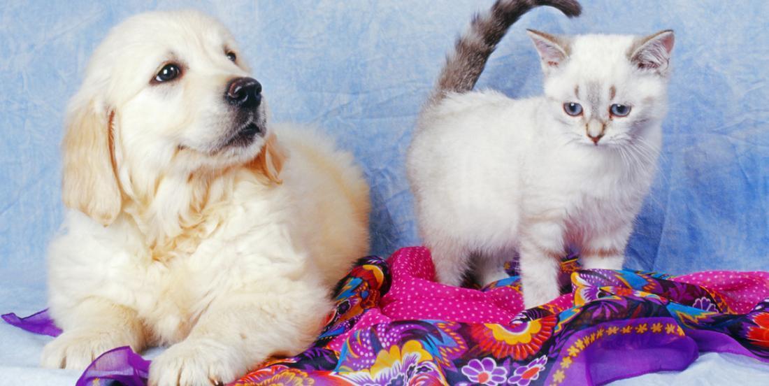 Adoption d'un animal: combien vous coûtera Pitou ou Minou tout au long de sa vie?