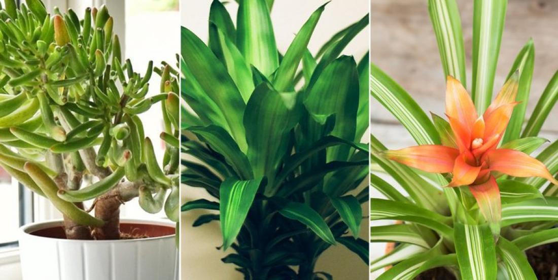 5 plantes d'intérieur qui purifieront l'air de votre maison