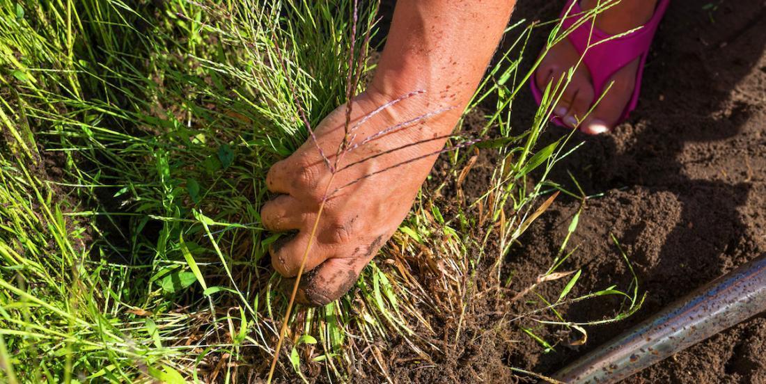 Approuvés par les pros du jardinage: 9 herbicides naturels qui ne tuent pas les fleurs