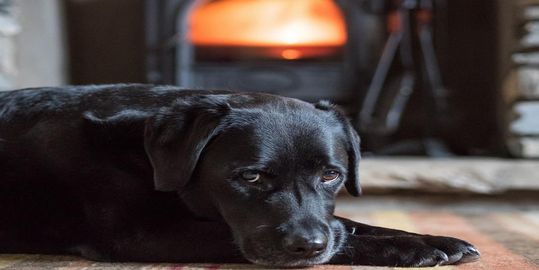 8 conseils qui vous aideront à chasser l'odeur de chien de votre maison