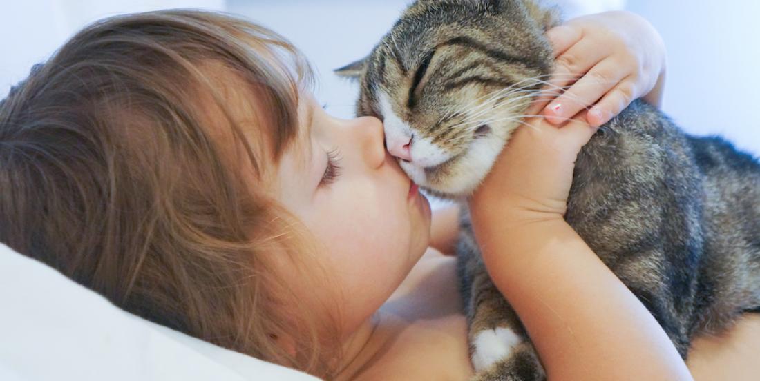 Les personnes allergiques aux chats pourraient profiter d'un vaccin dans quelques temps
