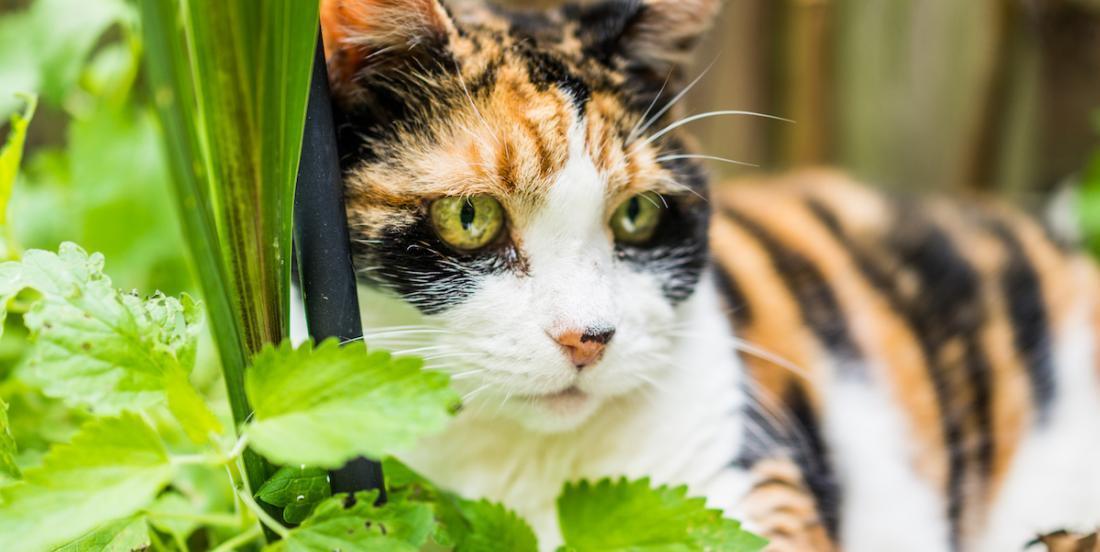Voici pourquoi vous ne devriez pas avoir de lys de Pâques si vous vivez avec un chat!