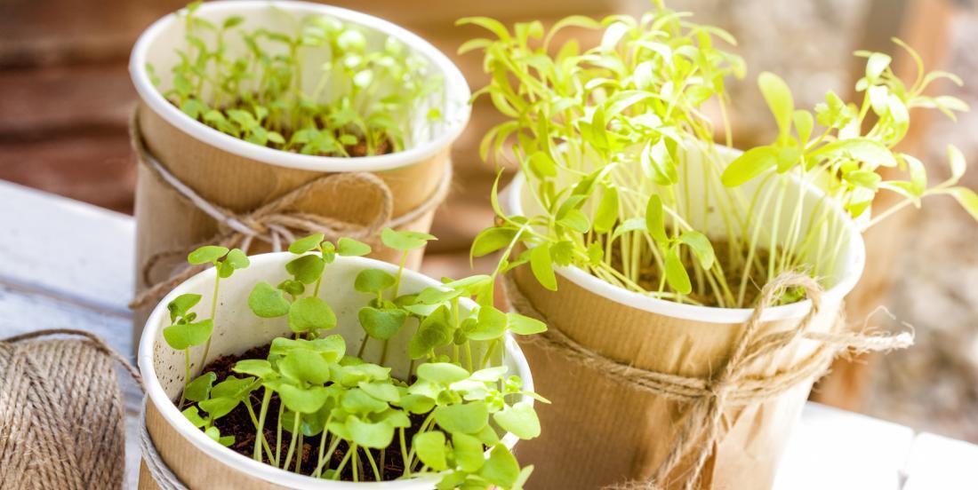 12 fines herbes que vous pouvez facilement faire pousser à l'intérieur