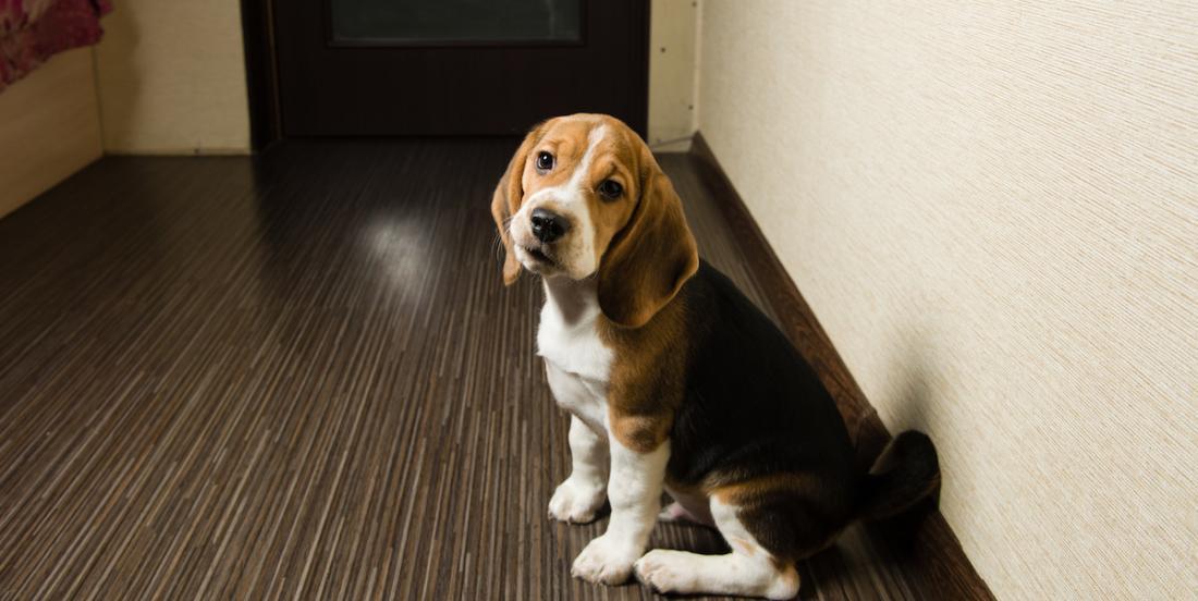 7 conseils pour habituer votre chien à être seul.