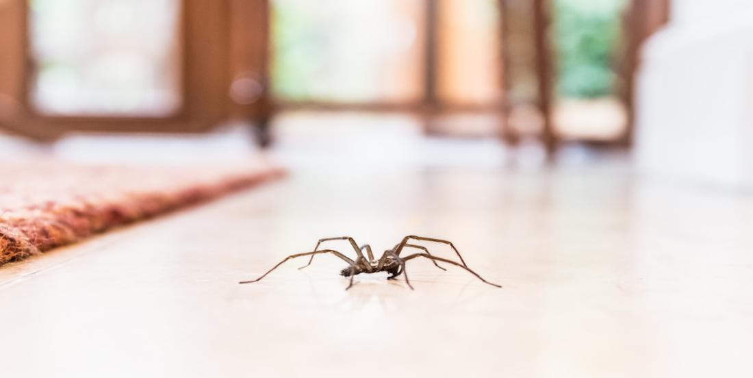 6 astuces qui éloigneront les araignées de votre cuisine, salle de bain et chambre à coucher