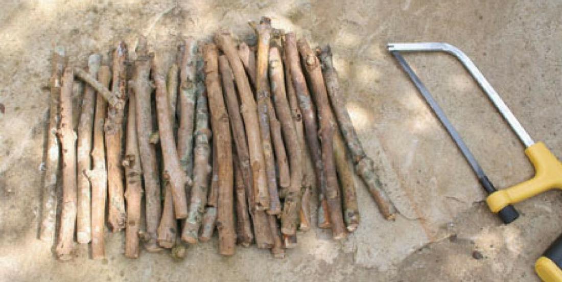 Avec des branches d'arbre trouvées à l'extérieur réalisez ces 7 projets bricolages