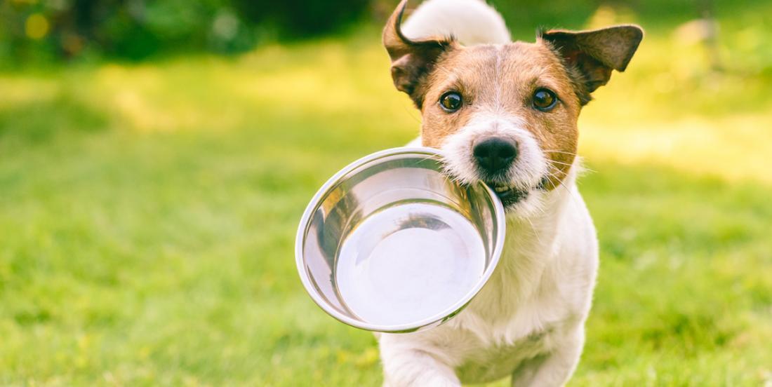 7 aliments qui sont bons pour la santé de votre chien