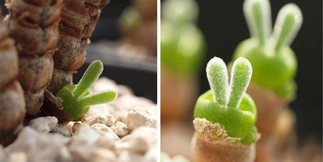 Avec ces plantes en forme de lapin et faciles d'entretien, nul besoin d'avoir le pouce vert!