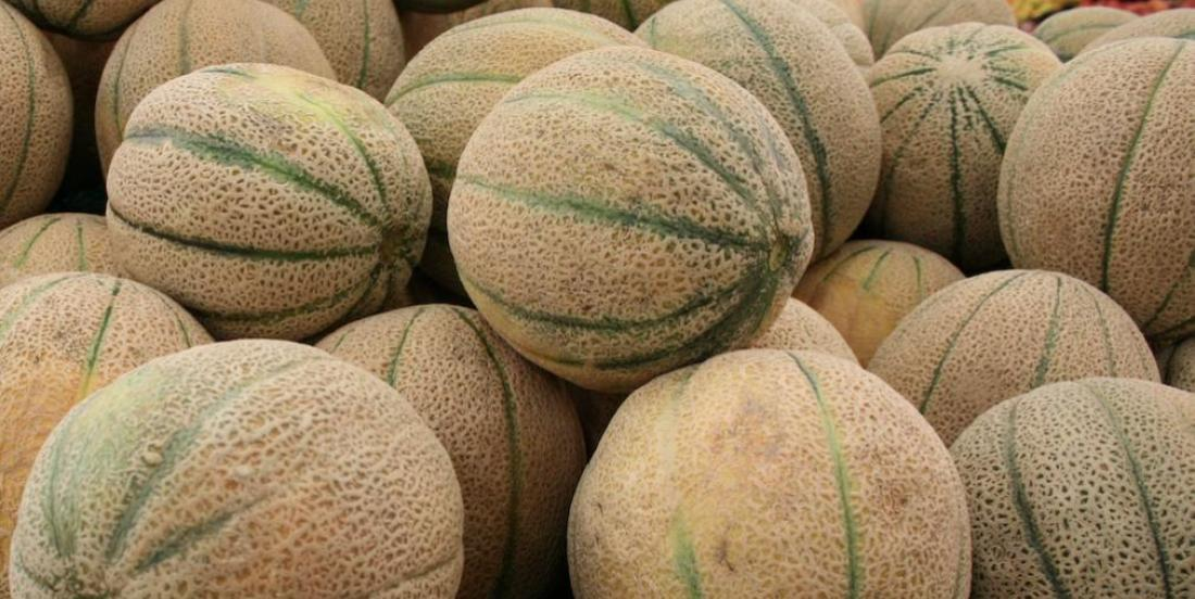 Comment bien choisir ses cantaloups à l'épicerie