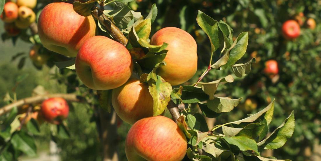 Voici comment faire pousser 8 arbres fruitiers à partir de noyaux