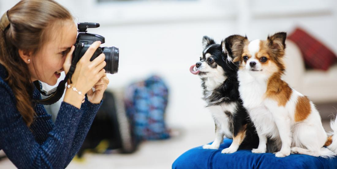 Une nouvelle étude nous apprend que les propriétaires de chiens prennent plus de photos de leur animal que de leur conjoint.