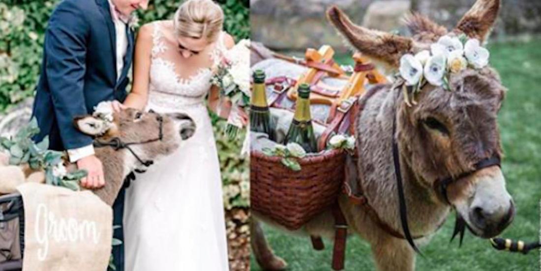 Nouvelle tendance en matière de réceptions de mariage:  des ânes miniatures qui servent les boissons!