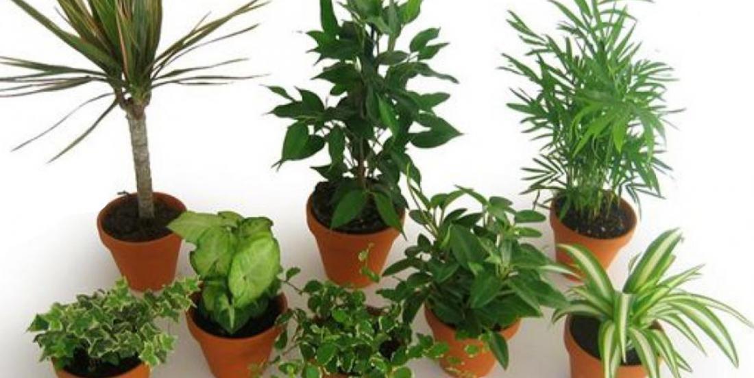 Listes des plantes qui purifient l'air de nos maisons