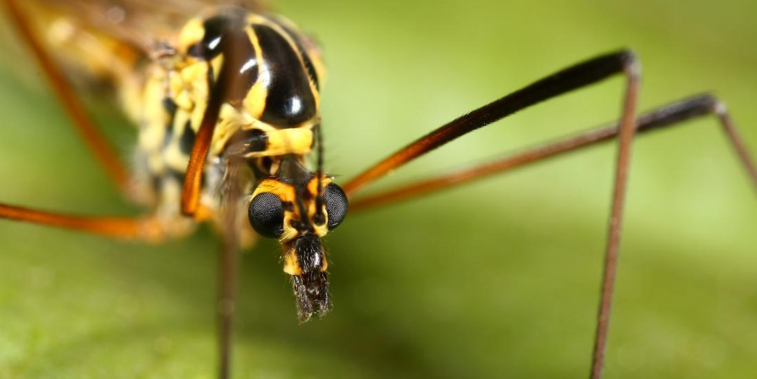 7 plantes pour vous protéger des moustiques