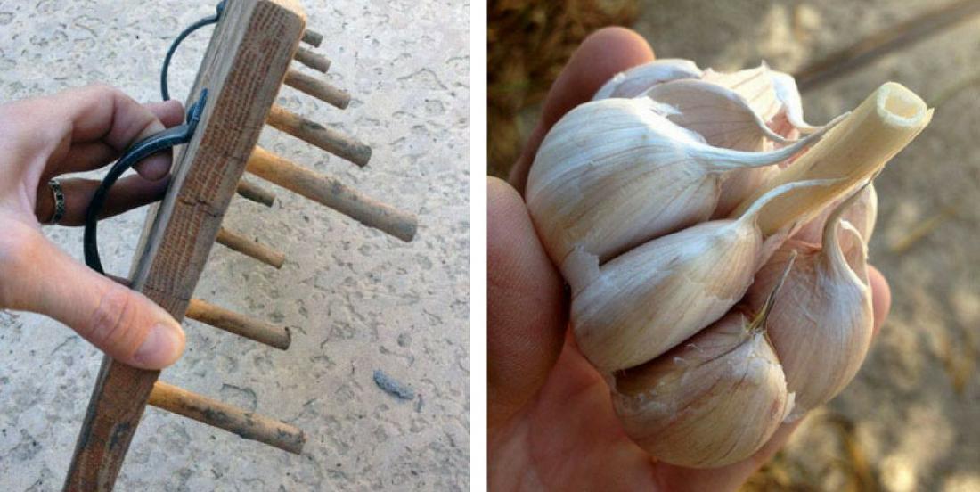 5 astuces simples pour cultiver de l'ail et en avoir à l'année longue