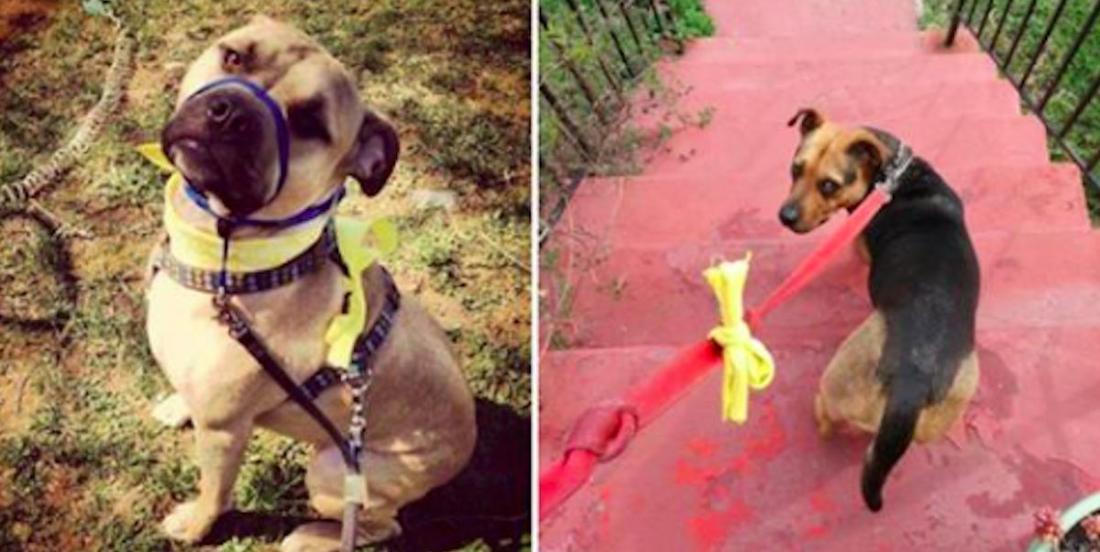 Si vous croisez un chien dont la laisse est munie d'une boucle jaune, voici comme réagir