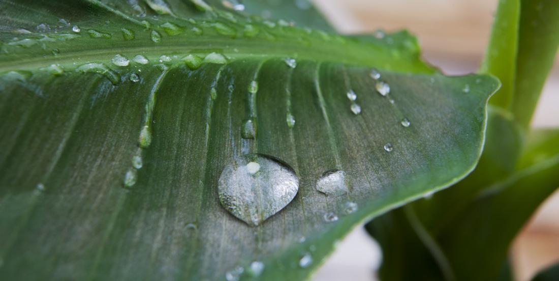 6 façons d'humidifier votre maison sans utiliser d'humidificateur