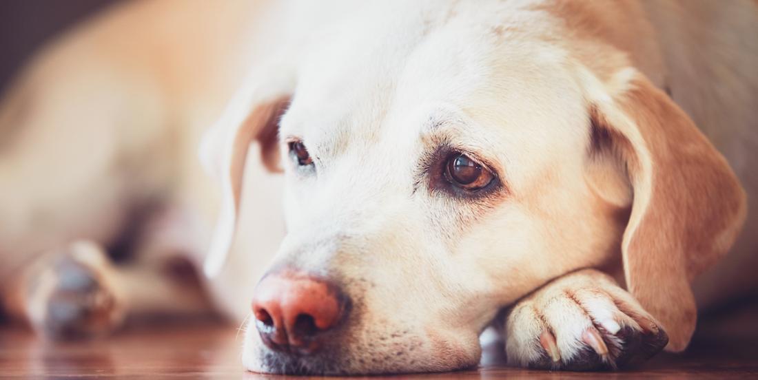 10 signes démontrant que votre chien est malade