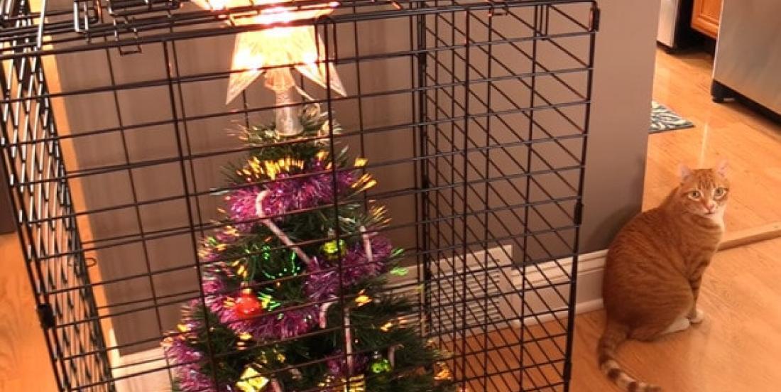 20 décorations de Noël résistantes aux dégâts de vos animaux de compagnie!