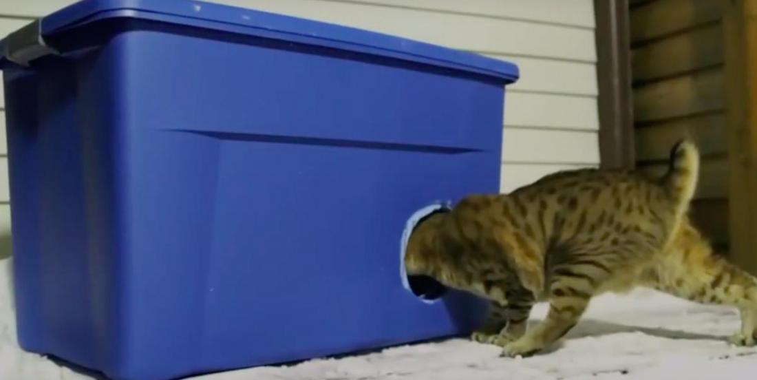 Comment fabriquer un abri pour chat en prévision des temps froids