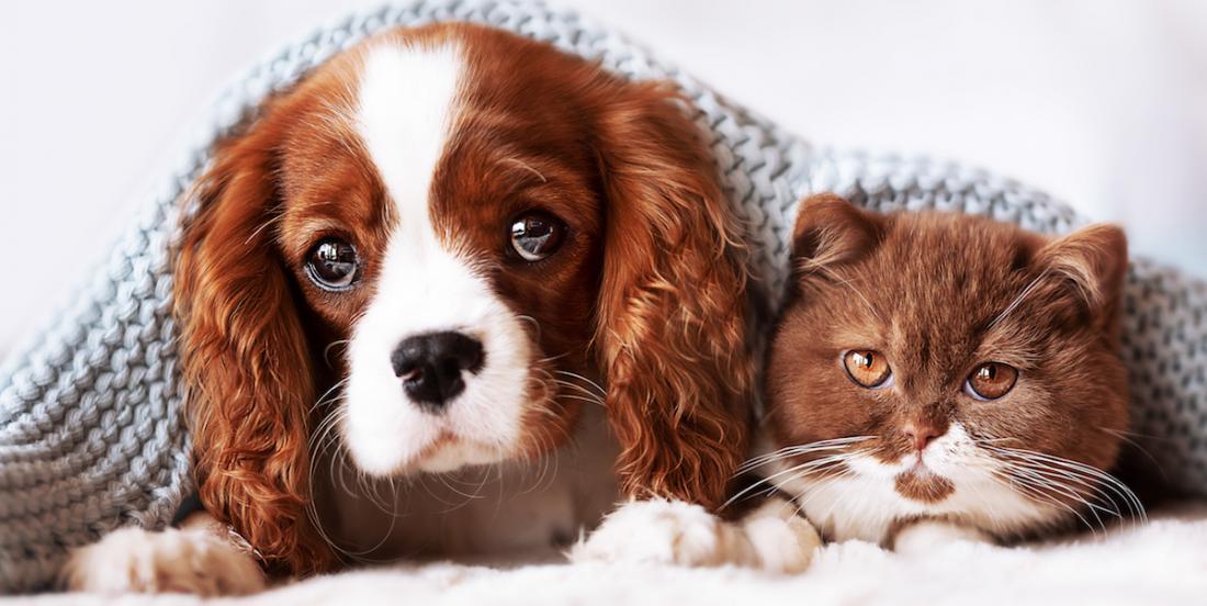 8 chiens qui s'entendront bien avec votre chat!