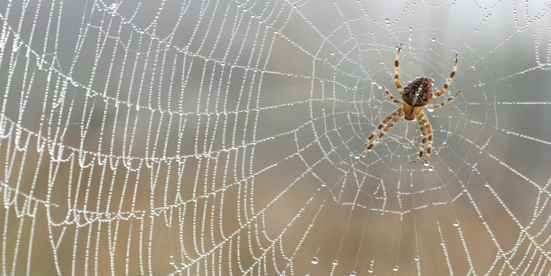Chassez les araignées une fois pour toute de votre maison grâce à ces astuces simples