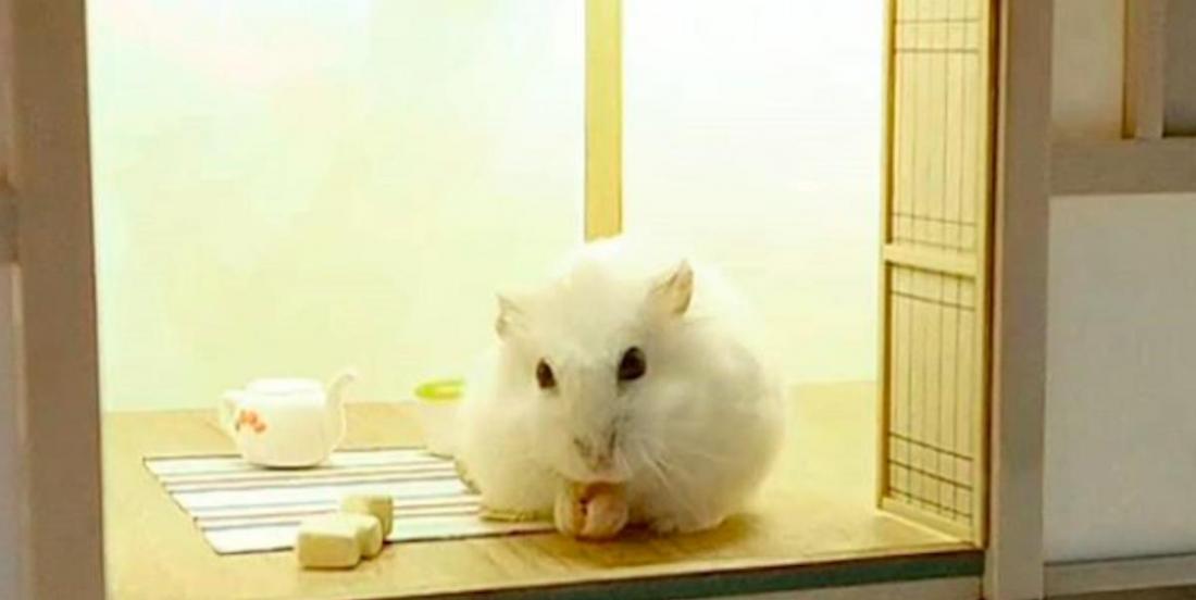 Un architecte conçoit d'adorables maisons de luxe pour hamsters