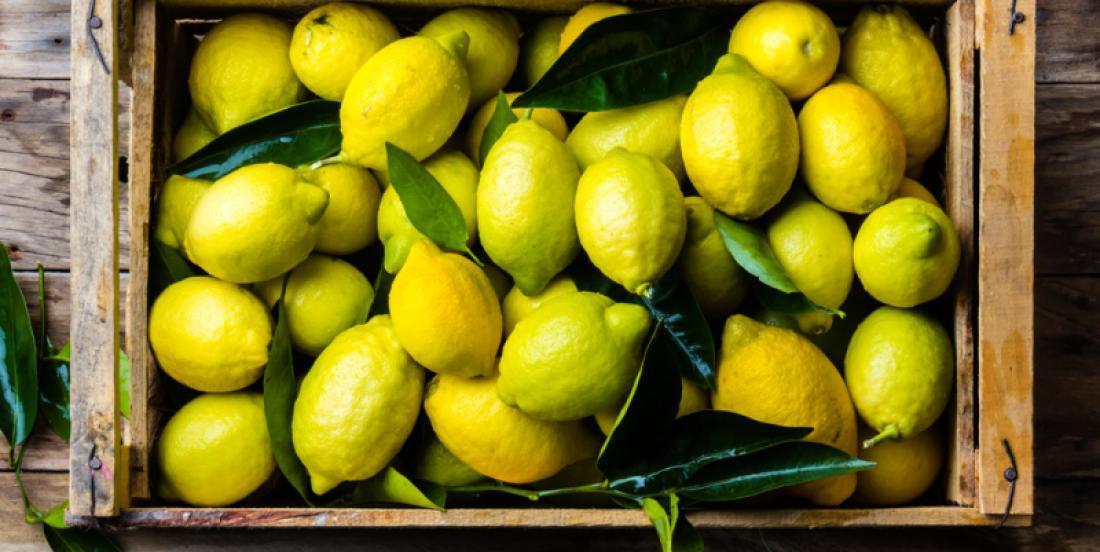 Voyez comment conserver des citrons durant plusieurs mois avec un simple bol d'eau