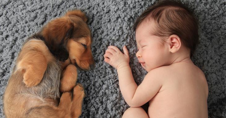 Futurs parents, voici des conseils pour préparer votre animal de compagnie à l'arrivée de bébé